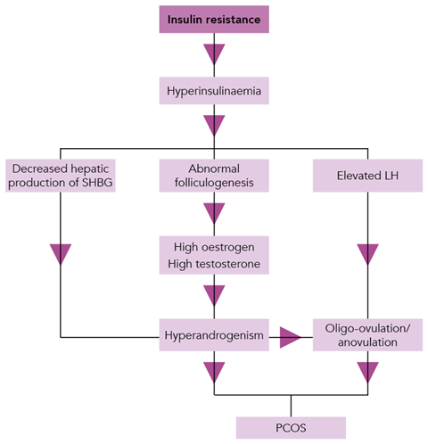 A flowchart showing the hormonal processes that lead to the development of polycystic ovary syndrome